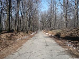 Strada nel bosco