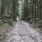 Sentiero n. 309 poco dopo Tezzi Alti
