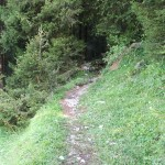 Sentiero n. 309 nei pressi della Baita Bassa Vigna Vaga