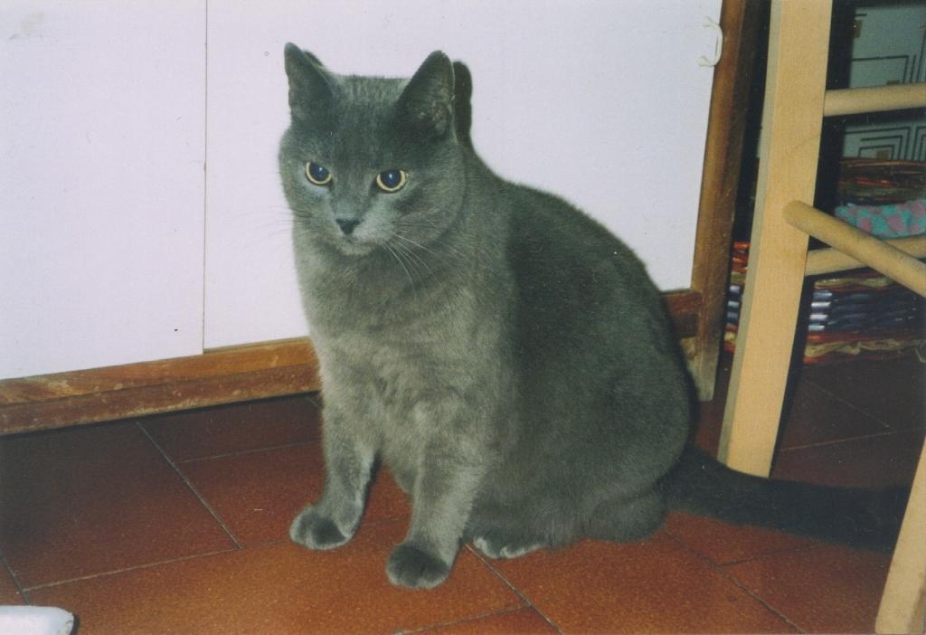 Inverno 2004, casa vecchia - Tom