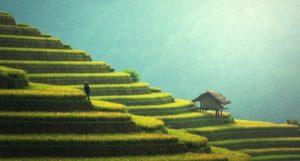 La rivoluzione agricola