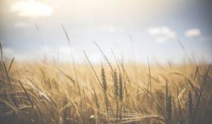 La rivoluzione agricola e l'alimentazione