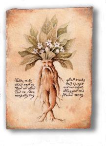 In numerosi testi antichi la radice di mandragora viene rappresentata con sembianze umane