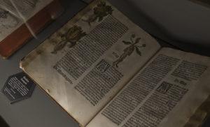 Un testo di botanica francese del 1485, esposto alla Roche Jagu, a Ploëzal, in Francia, aperto sulla pagina dedicata alla Mandragola