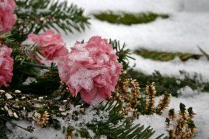 fiori nel cimitero