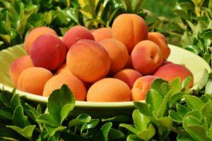 Le albicocche arancioni di cui va ghiotto il nostro cinghiale