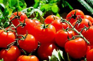 """La celebre poesia """"ode al pomodoro"""" di Neruda celebra la bellezza di questo frutto"""