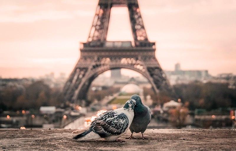 La vie en rose – L'amore e la musica nel brano immortale di Edith Piaf
