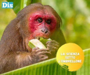 La banana, frutto perennemente in via di estinzione