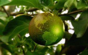 Una mela che vale un mondo di sostenibilità