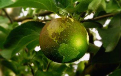 Sosteniamoci – 5 motivi per scegliere la sostenibilità