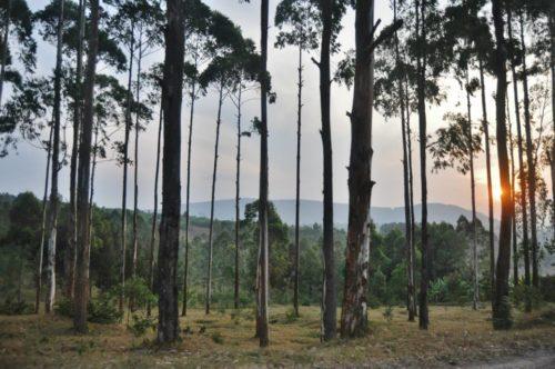 Paesaggio rwandese al tramonto