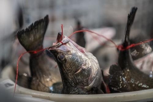Pesci al mercato di Taiwan