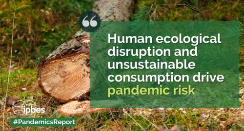 Distruzione degli ecosistemi
