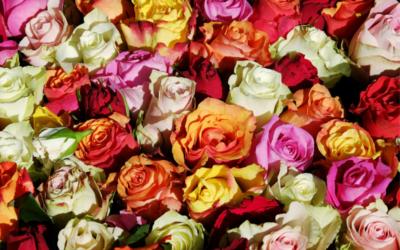 La storia delle rose – Quello che c'è da sapere sui fiori simbolo di san Valentino