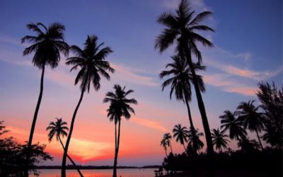"""Curiosità sulla palma da cocco, ovvero """"come adattarsi a vivere ai tropici contro ogni aspettativa"""""""